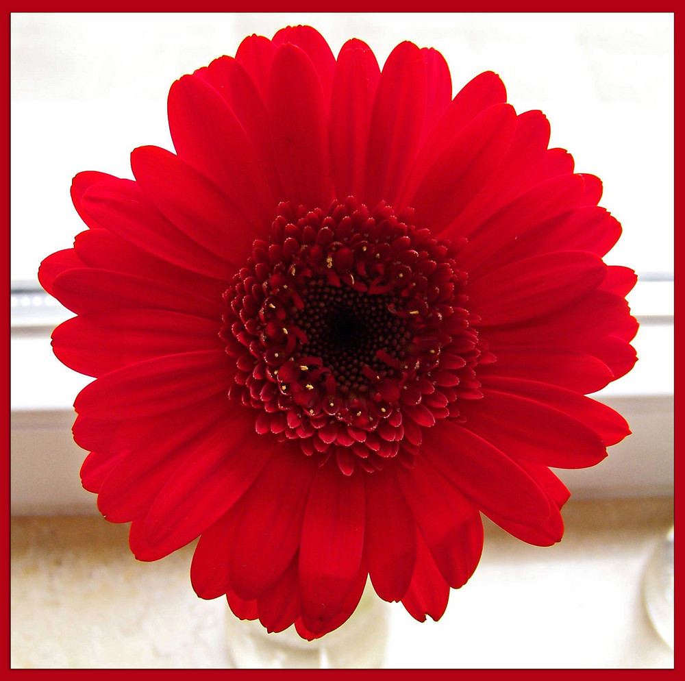 Mit dieser Blume.....