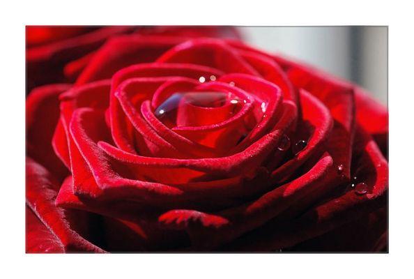 Mit dieser Rose wünsche ich euch einen schönen Abend