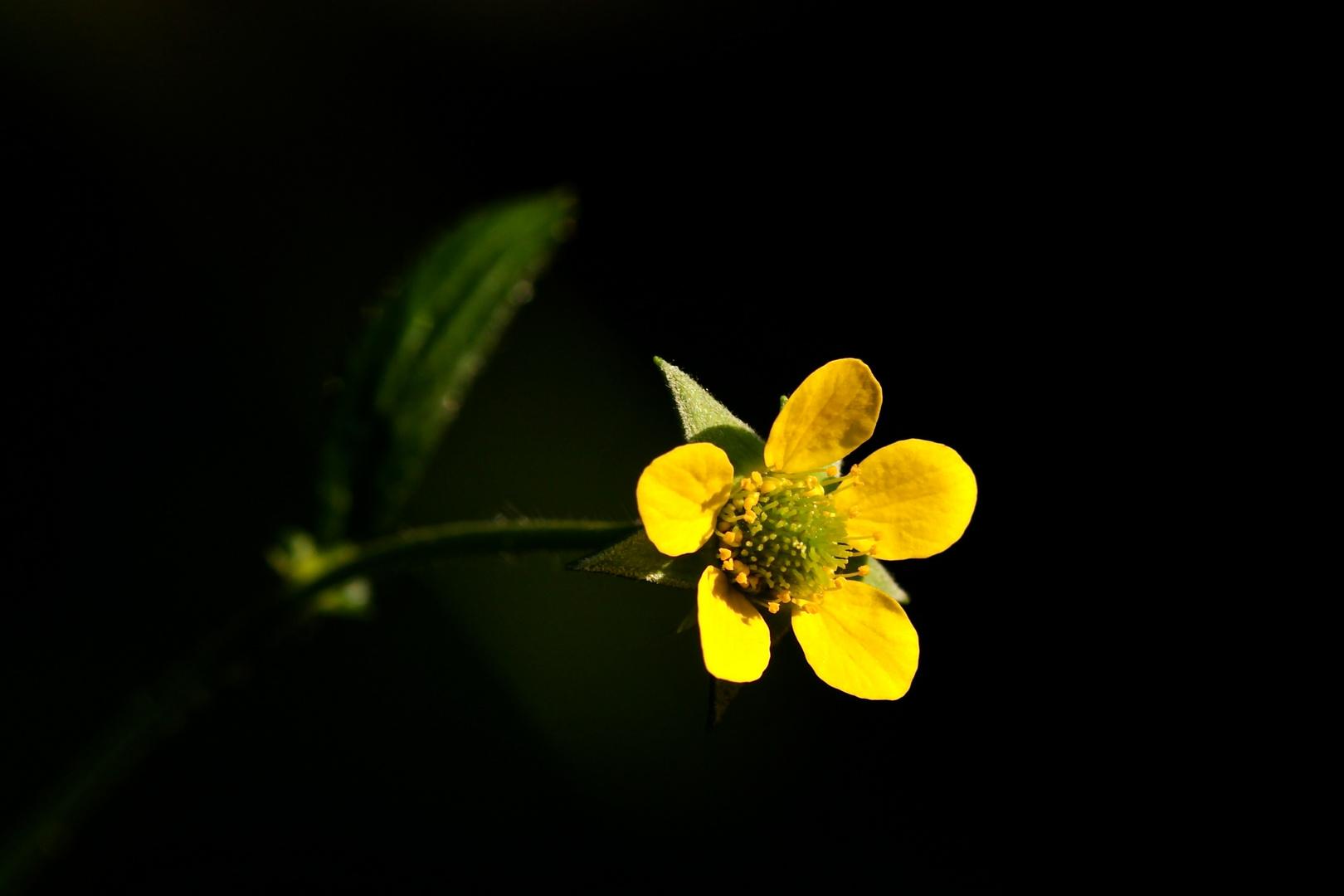 Mit dieser winzigen Blüte in meiner Lieblingsfarbe wünsche ich allen fc-Freunden . . .