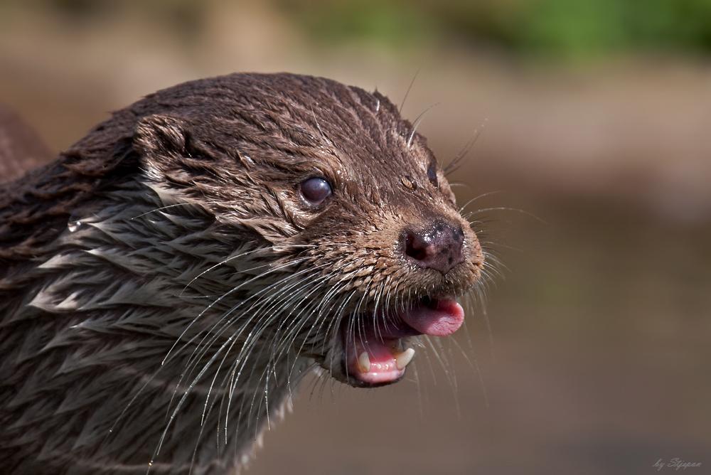 Mit einem Otterschleck