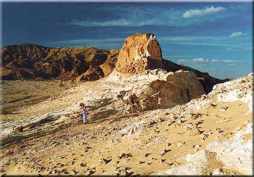 Mit einem Wüstenschiff im Sinai