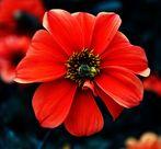 mit einer Blüte ins Wochenende ...ein schönes Solches wünsche ich Euch