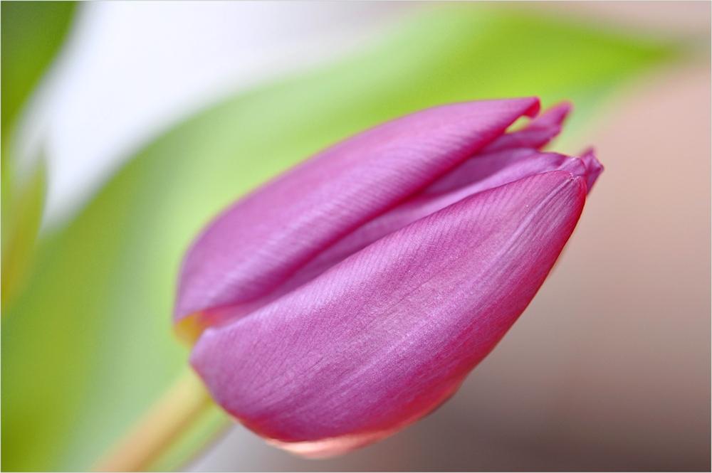 mit Frühlingsfarben.