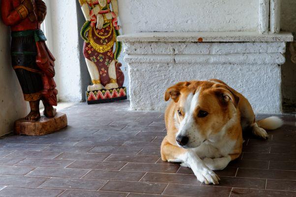 Mit Hund im Museum wohnen ........