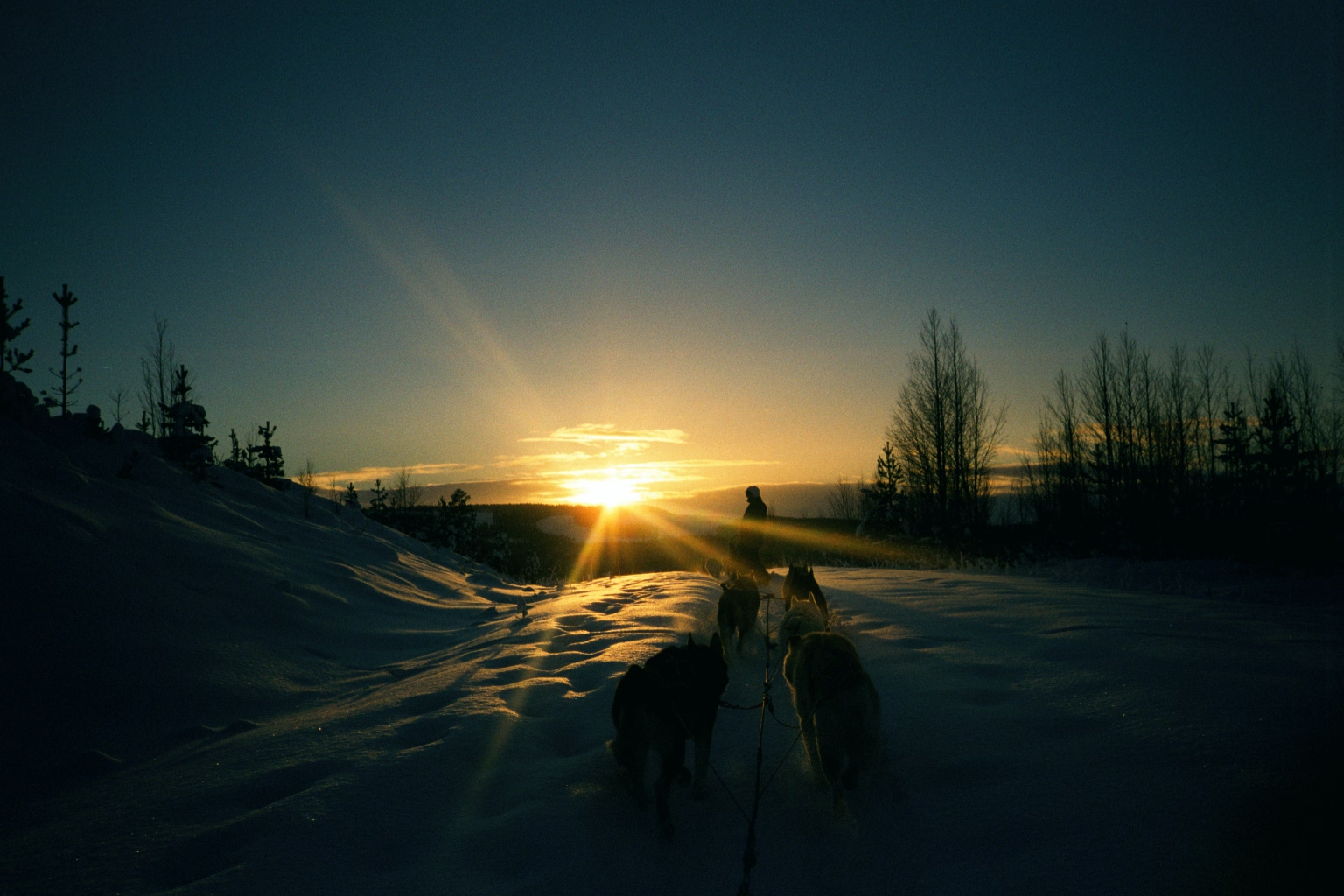 Mit Huskys in Lappland