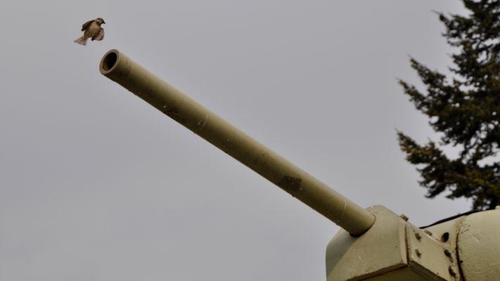 Mit Kanonen auf Spatzen schießen