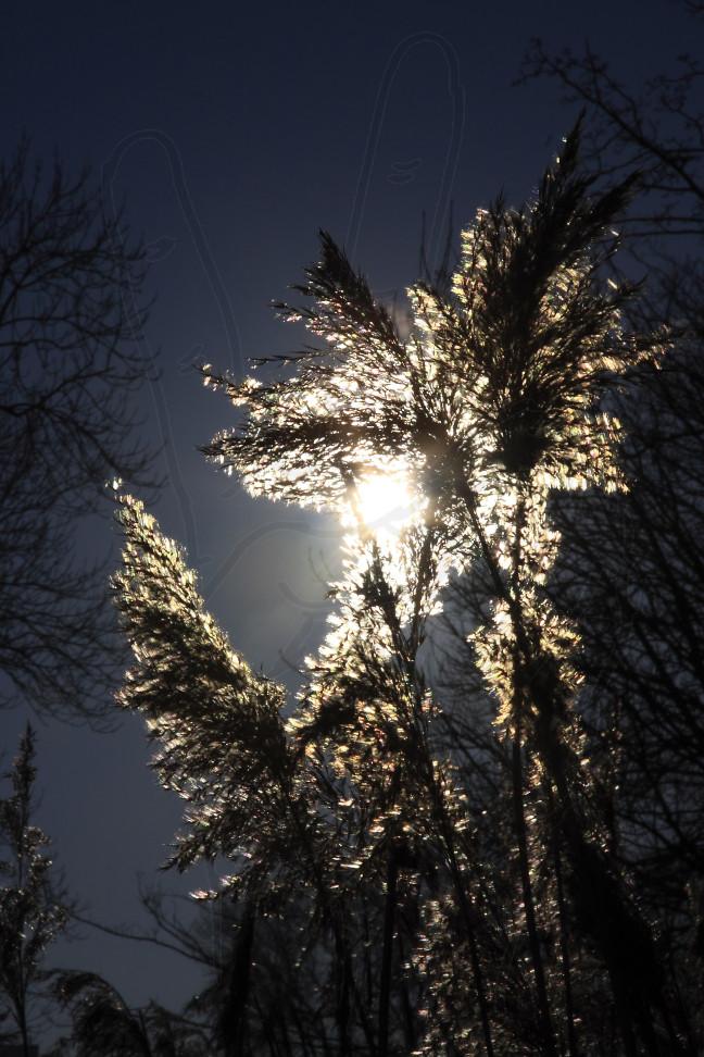Mit Licht umgarnt