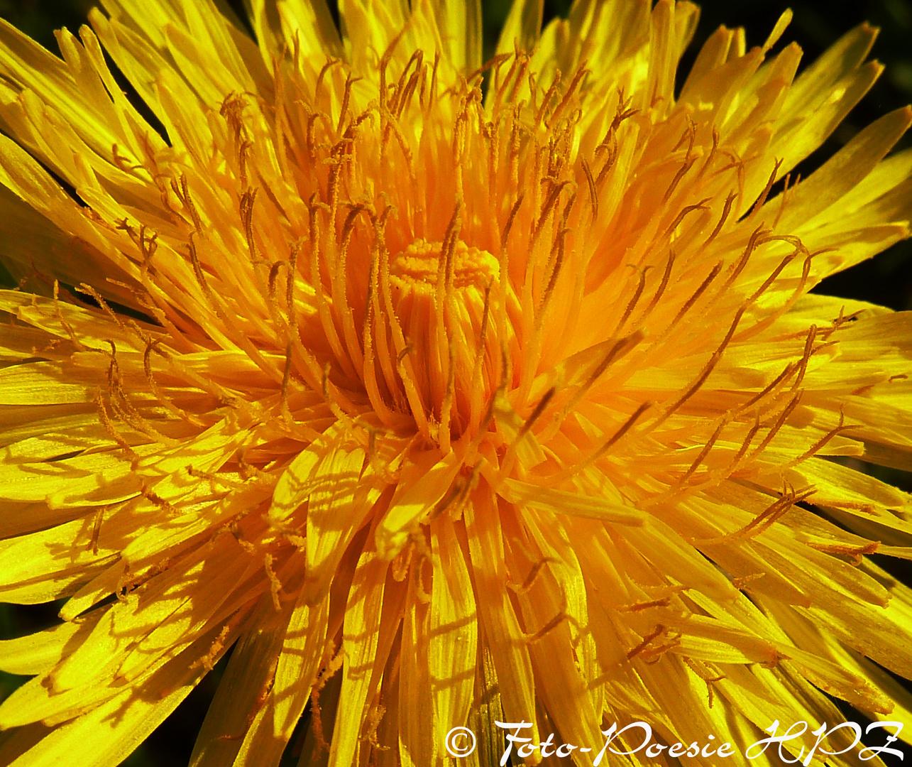 Mit Liebe in die Sonne geblinzelt