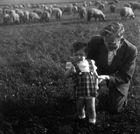 Mit Papa auf der Schafsweide