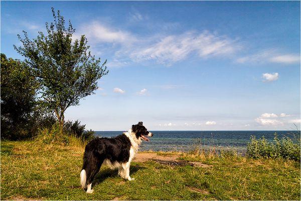 mit Paul an der Ostsee