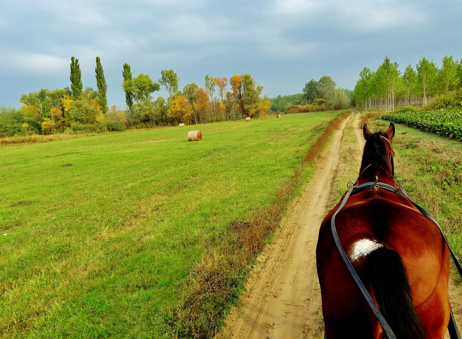 Mit Pferd & Kutsche in der ungarischen Weite