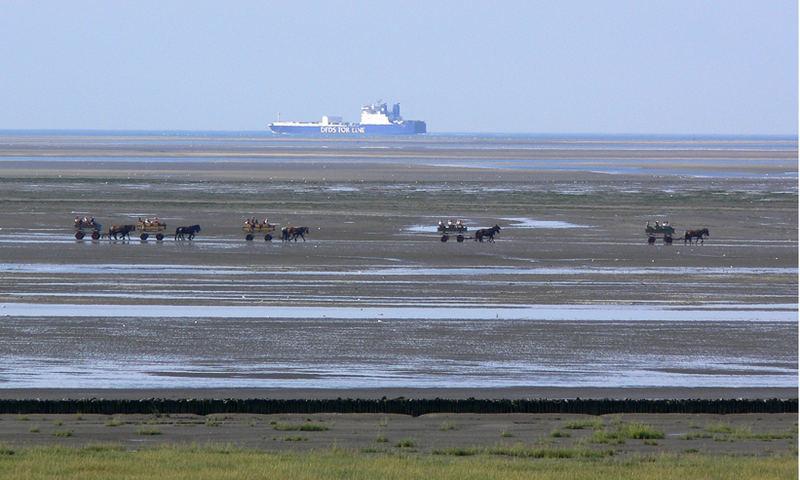 Mit Pferd und Wagen auf dem Meeresgrund