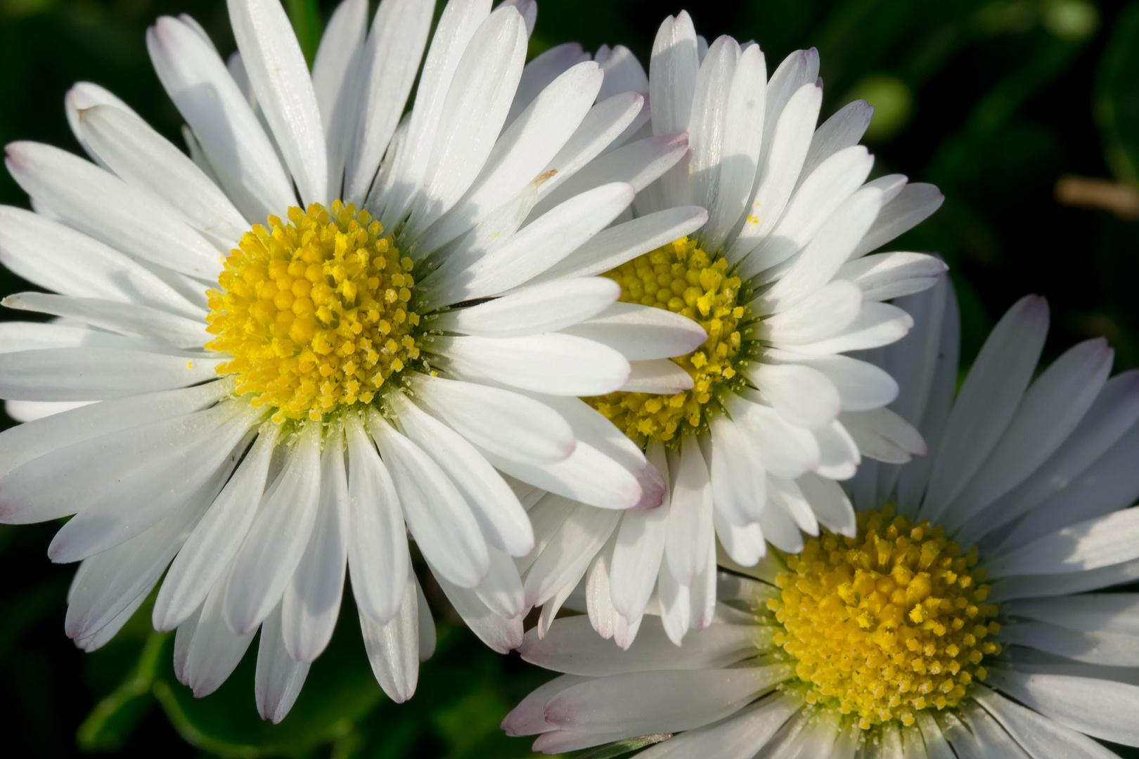 Mit Pollen volgepackt in den Frühling