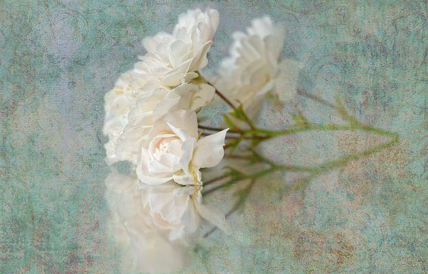Mit Rosen bedeckt ....