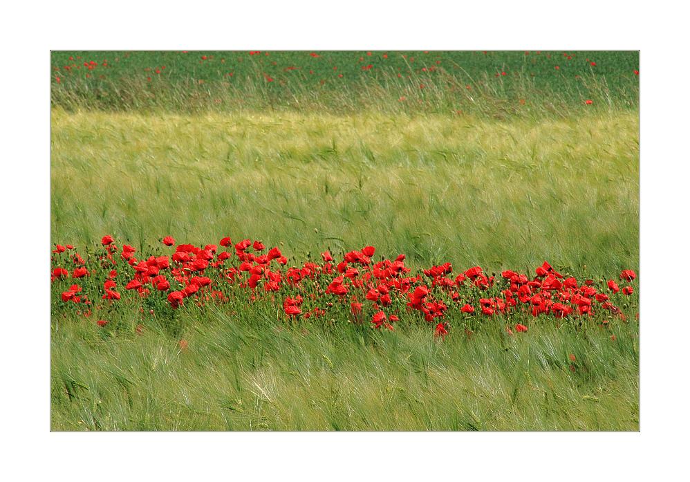 ...mit roten Fähnchen winkt der Sommer...