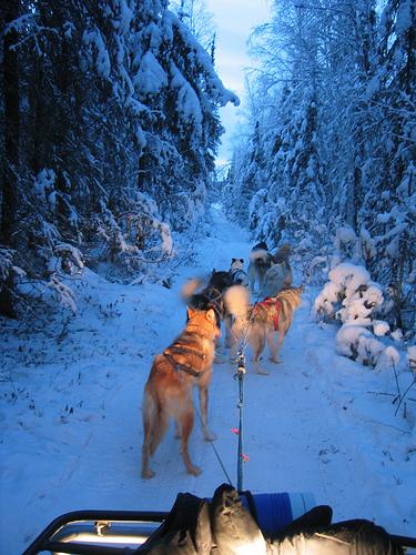 Mit Schlittenhunden und ATV unterwegs in Alaska