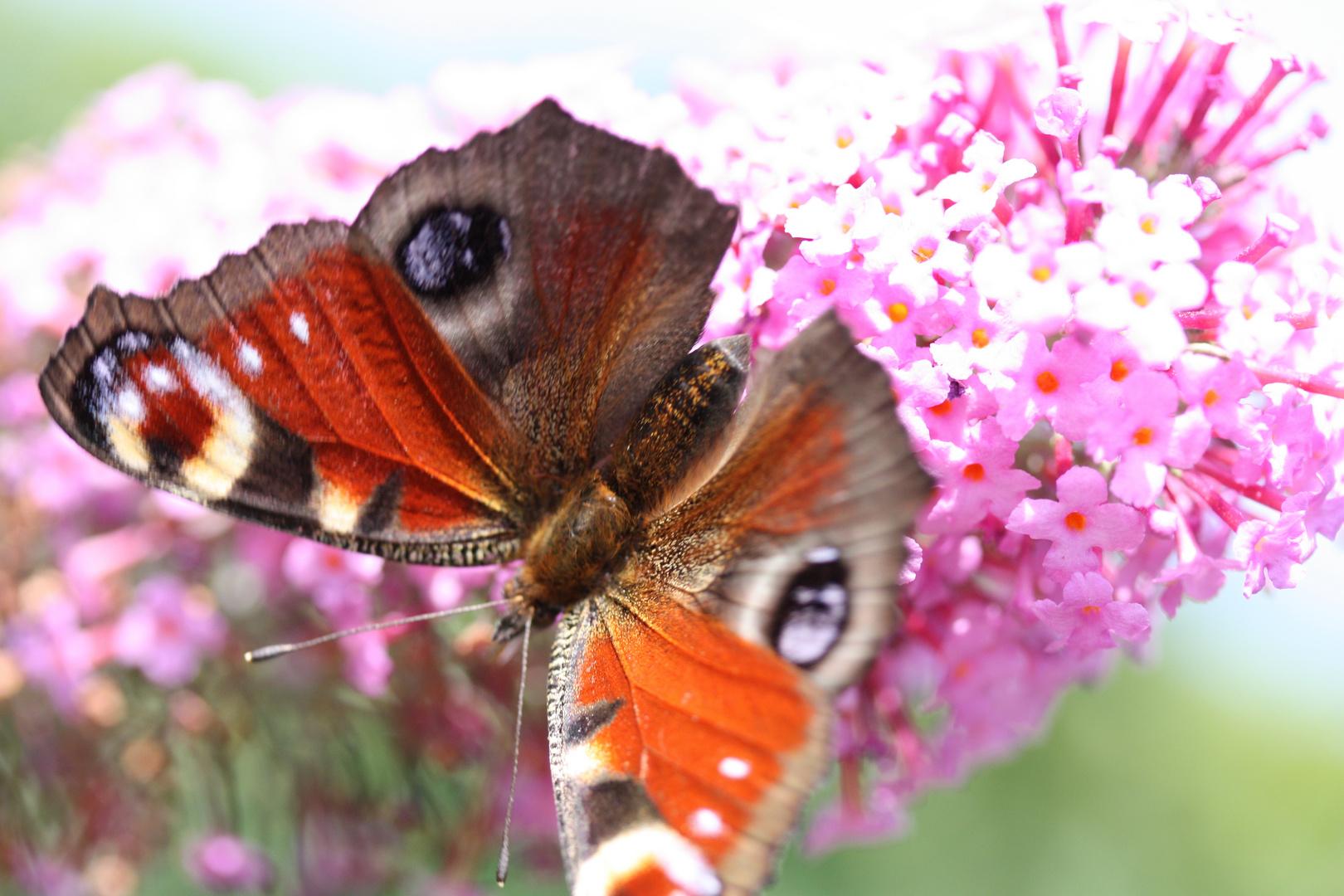 Mit Schmetterling auf Tuchfühlung