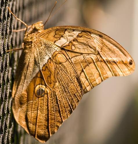mit Schmetterlingsfotos ..
