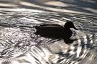 mit Sonnenschein das Schwimmen genießen...