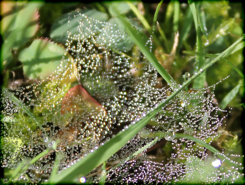 Mit Tautropfen geschmücktes Spinnennetz