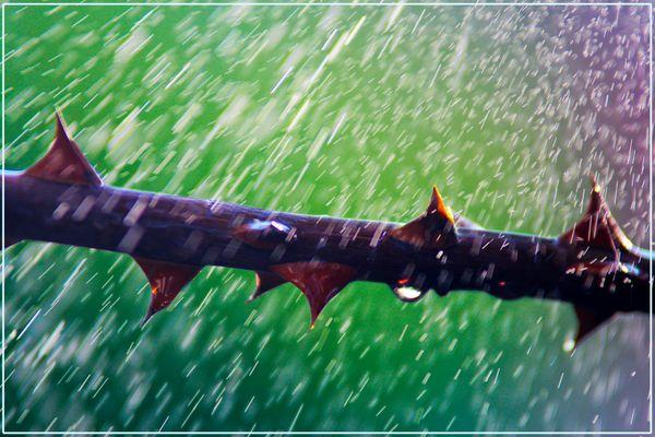 Mit Wasser aus der Sprühflasche einen Regen gezaubert