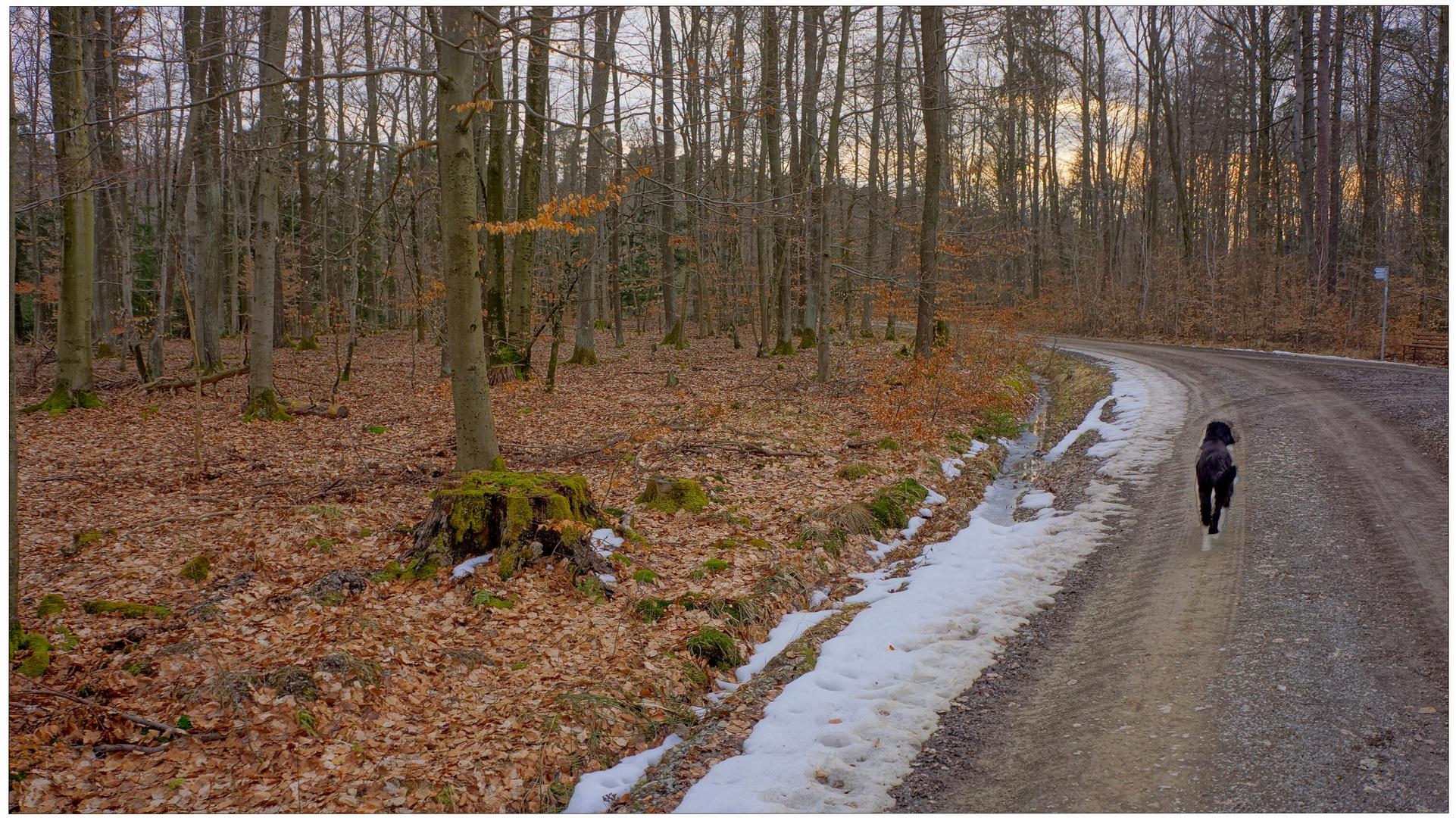 Mit Wicky-Emily durch den Wald (pasando con Wicky-Emily por el bosque)