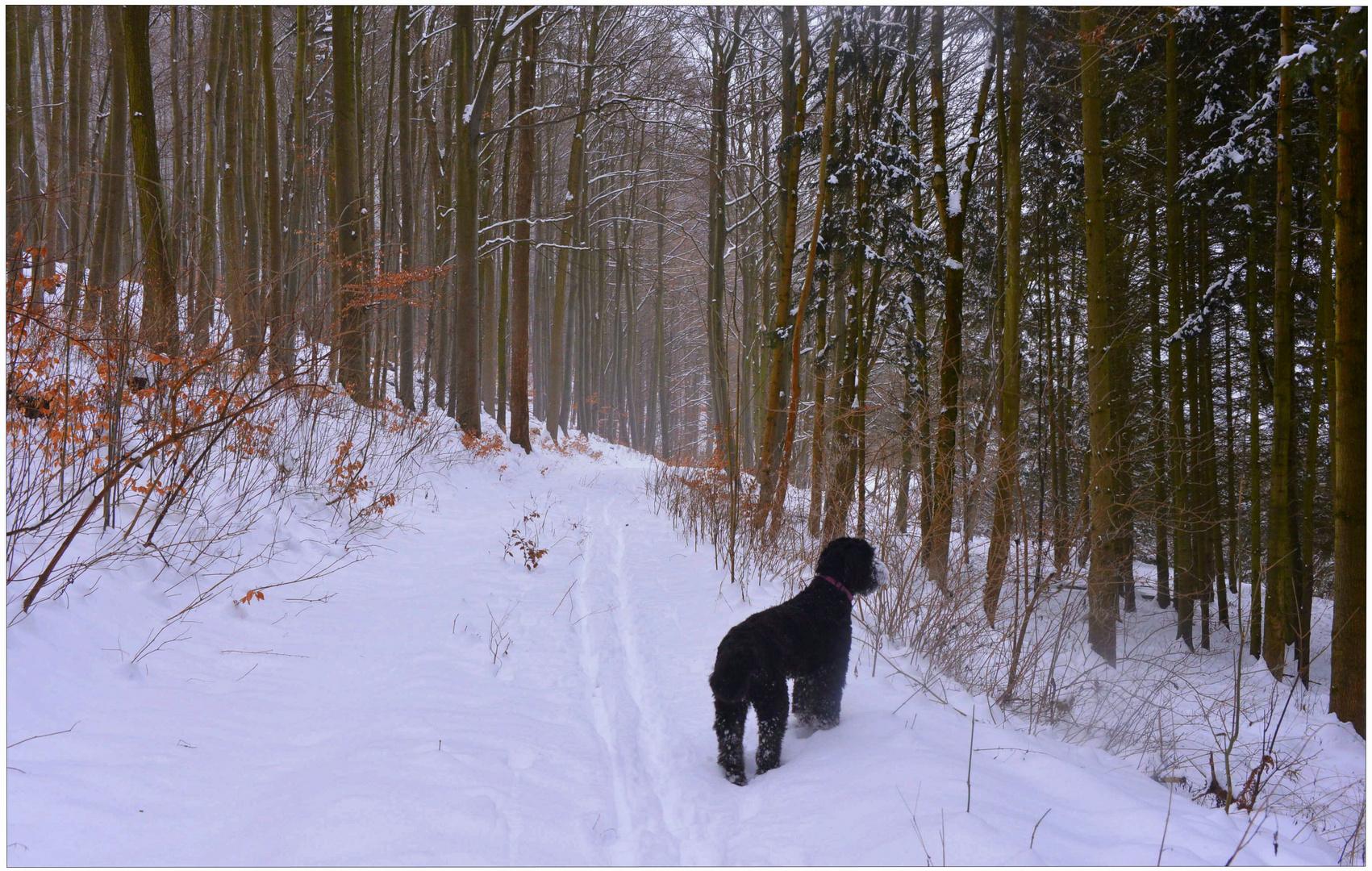 Mit Wicky-Emily im Winter-Wald (con Wicky-Emily en el bosque invernal)