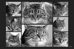 Mitmachaktion - Gesichtsausdrücke