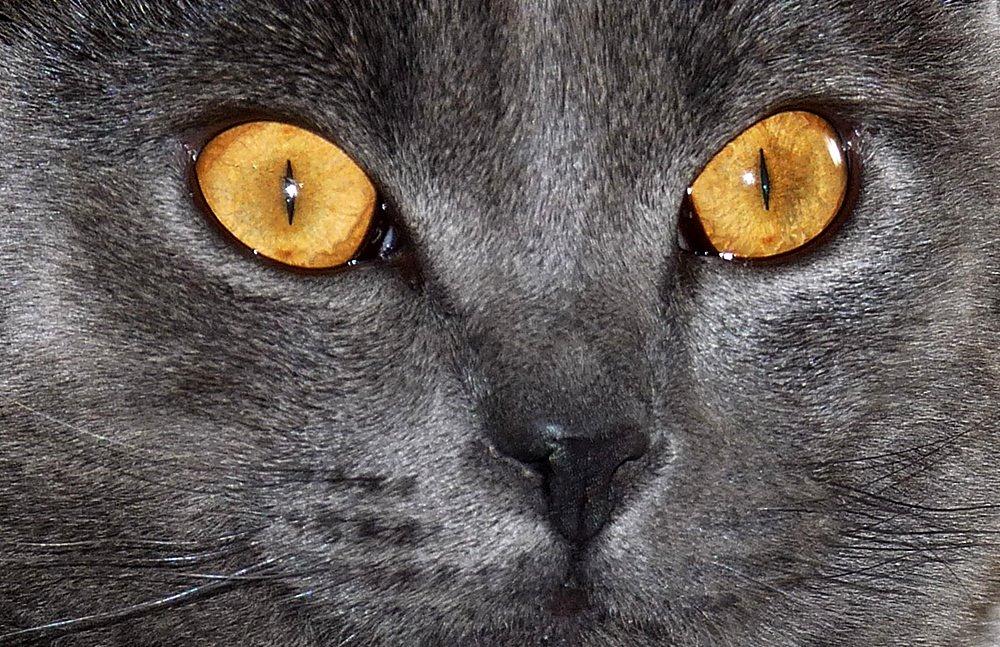 Mitmachaktion - Schöne Augen