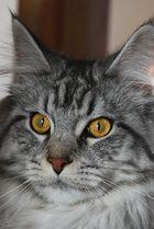 Mitmachaktion........schöne Augen