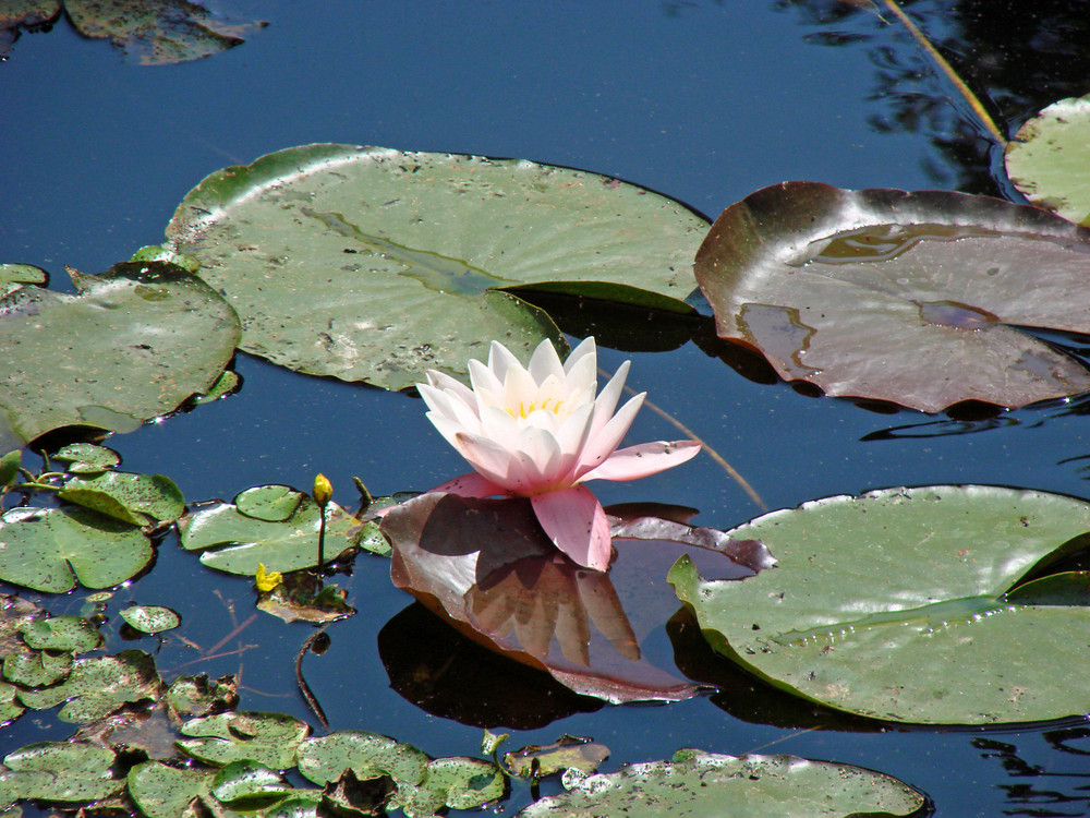 Mittags am Teich