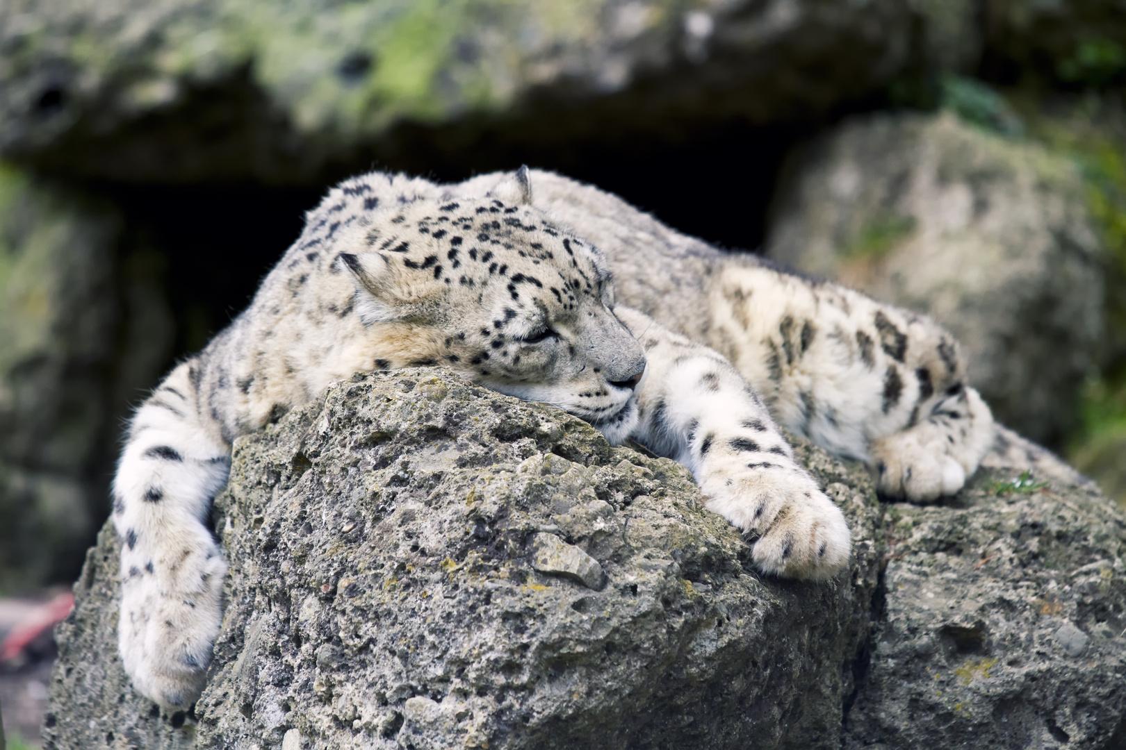 Mittagschläfchen