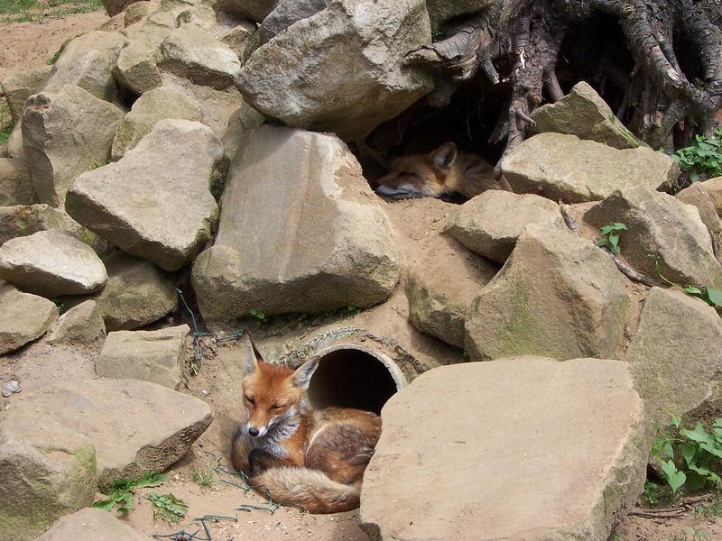 Mittagschlaf bei Familie Fuchs