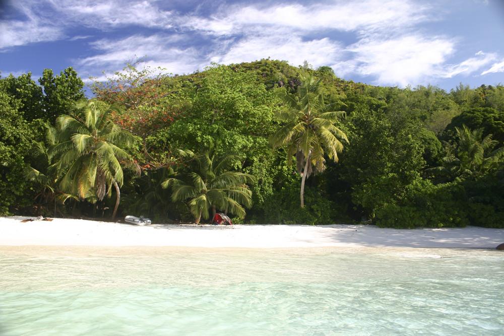 mittagschlaf unter palmen