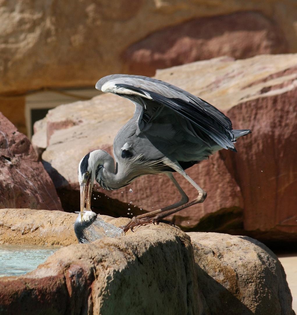 Mittagsmenü -Fisch-