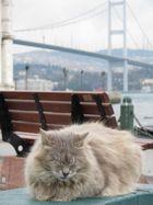 Mittagspäuschen am Bosporus
