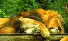 Mittagsschläfchen