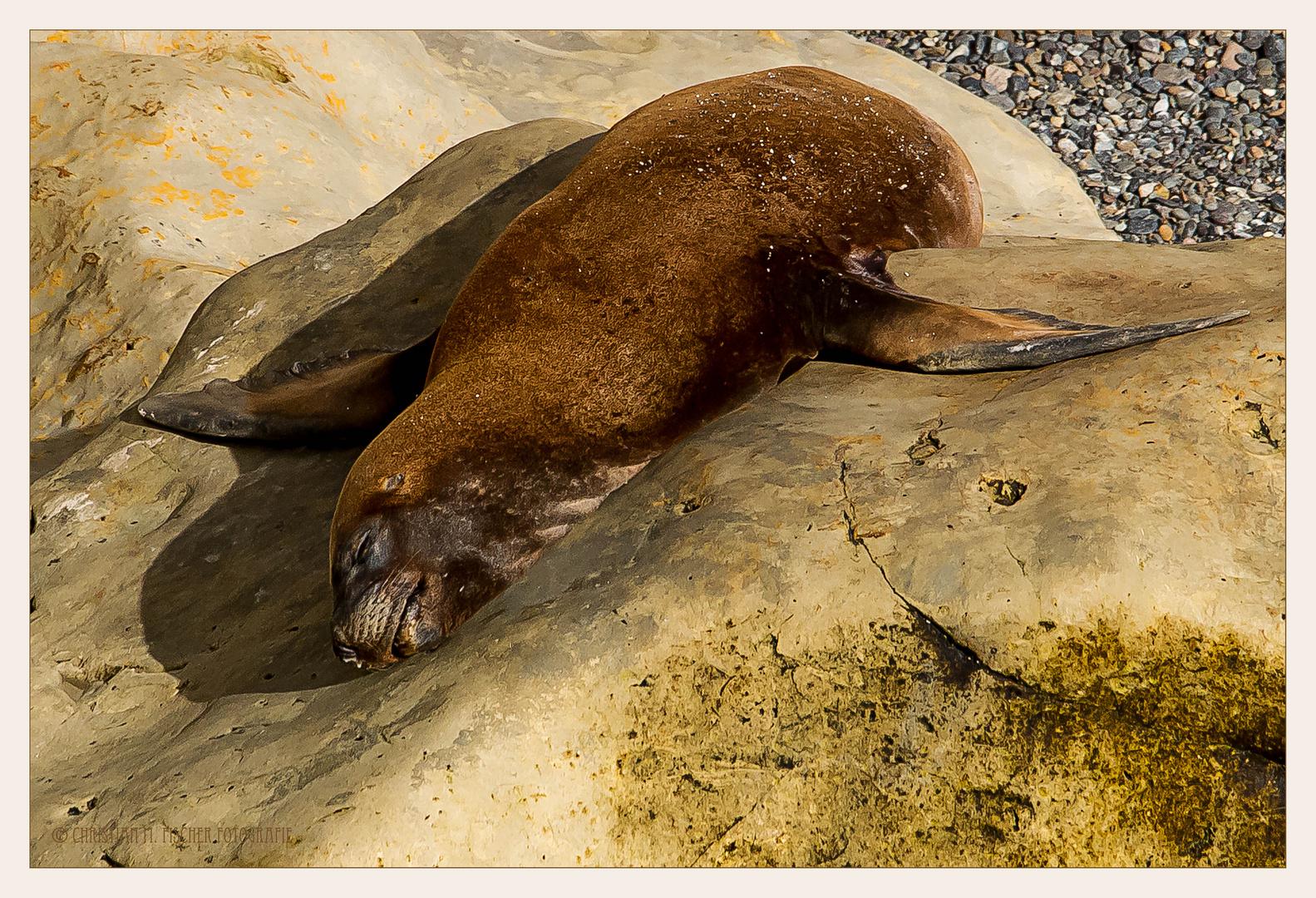 Mittagsschläfchen auf dem warmen Stein