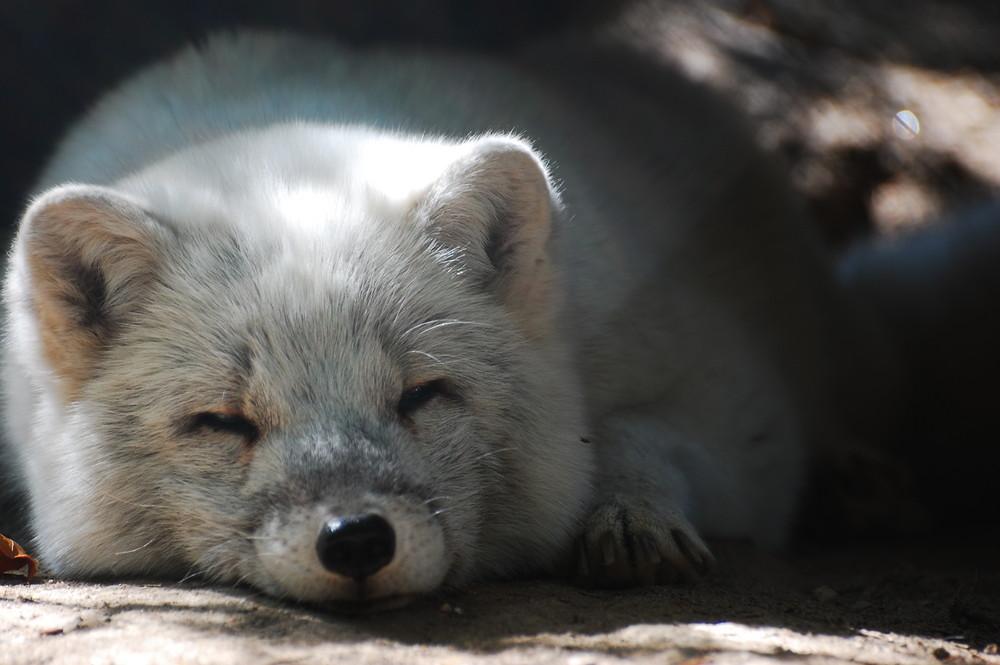 Mittagsschlaf