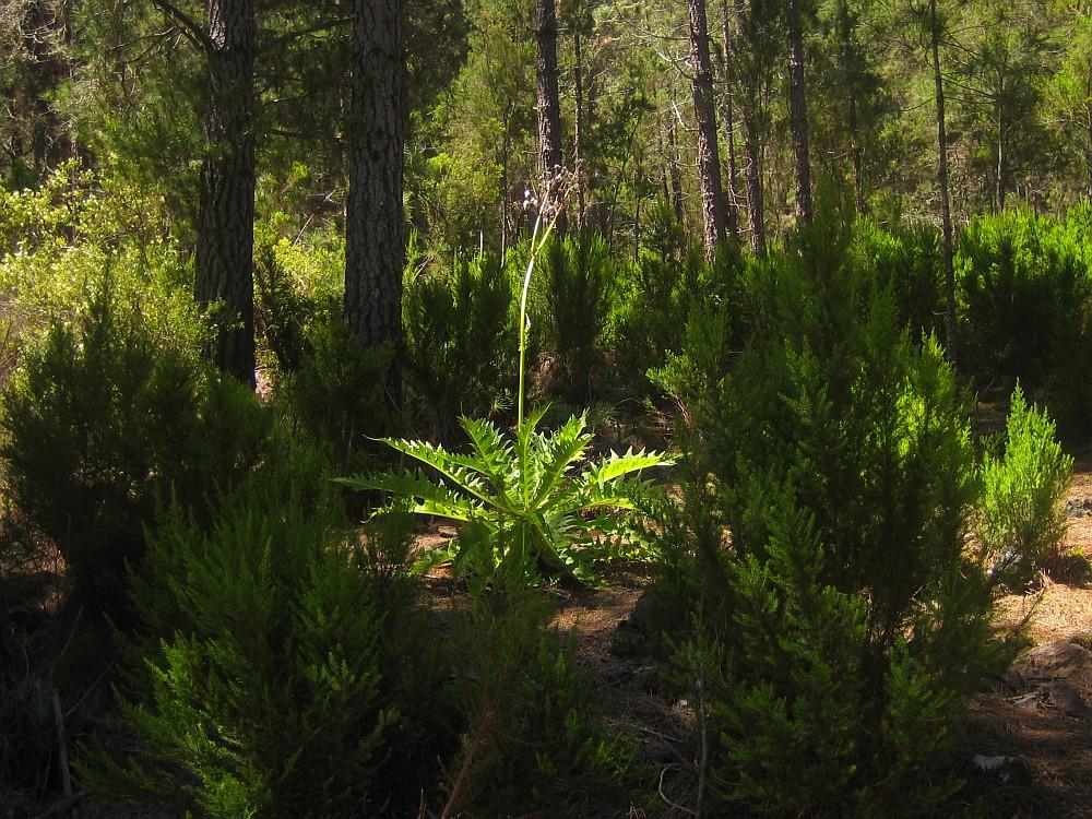 mitten im Wald .....