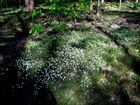 Mitten im Wald in der Nähe vom Niederwaldsdenkmal..