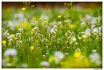 Mitten in der Frühlingswiese