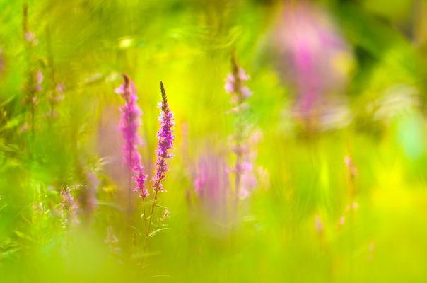 Mitten in der Wildblumenwiese