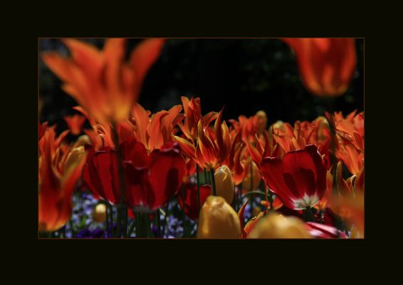 Mittendrin im  Blumenbeet