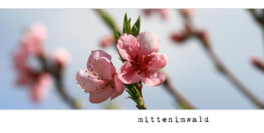 * mittenimwald