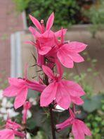 Mittwochblümchen