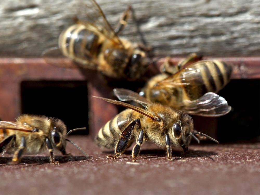 Mittwochs-Bienchen