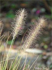Mittwochs-Blümchen-Gras