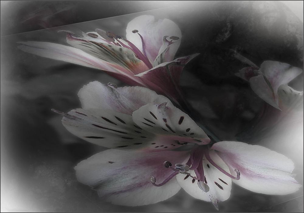 Mittwochs ... Blumen von Dir