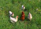 Mittwochs-Hühnchen